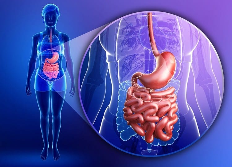 Hipotiroidismo, levotiroxina y enfermedades gastrointestinales 24